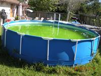 Stagnant water in above ground pool